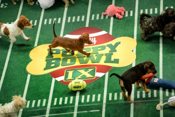 puppy bowl ix_s640x427 post picks thepostculture